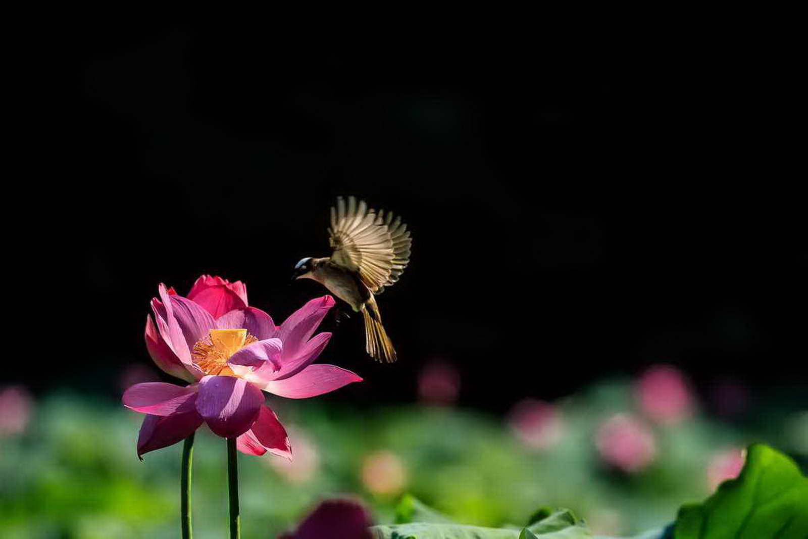 大连联通 朱海鸥 《赏花来》18639553368.jpg