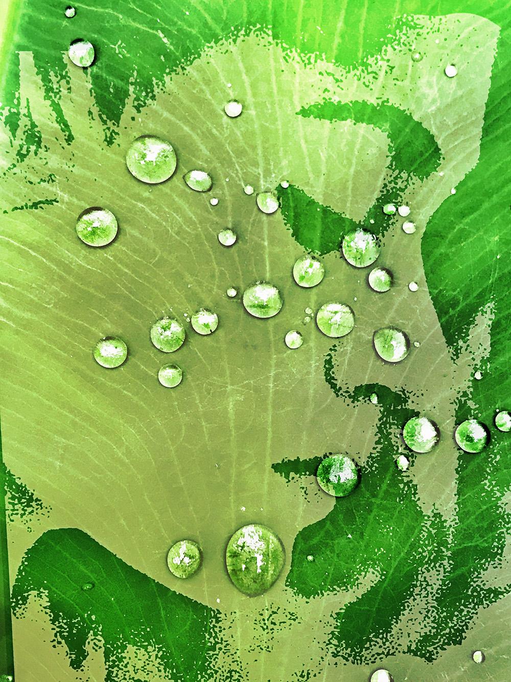 《绿色夏季》魏胜125302.JPG