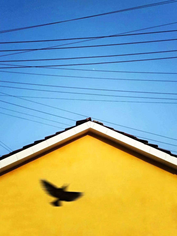 《鸟叫春来早》 徐海云 184779.jpg