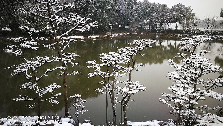 《雪韵》郑宏谋180783.jpg