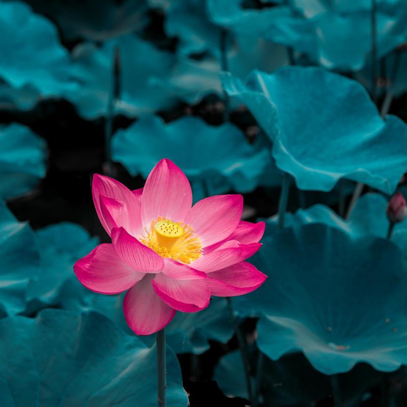 山西运城-高山流水 《荷色》 Nikon.jpg