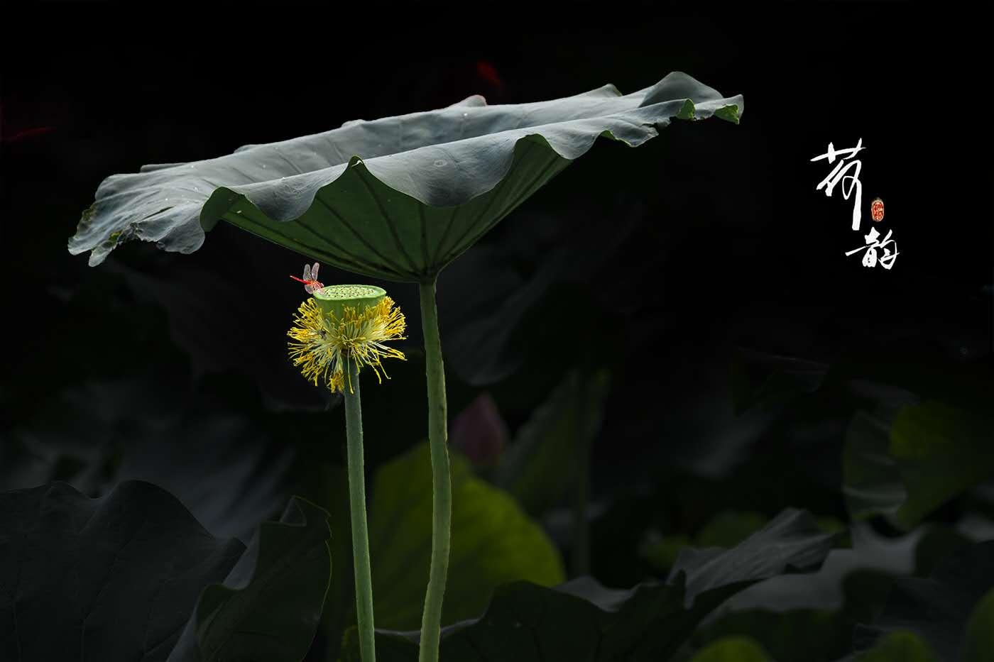 徐州-杨全德 《荷韵》 Nikon.jpg