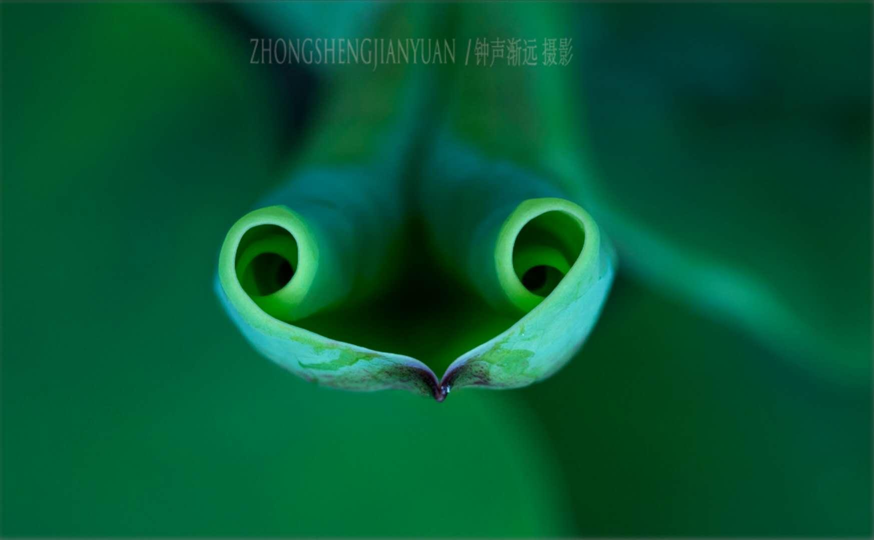 武汉-汤远忠 《荷情荷意》 Canon.jpg