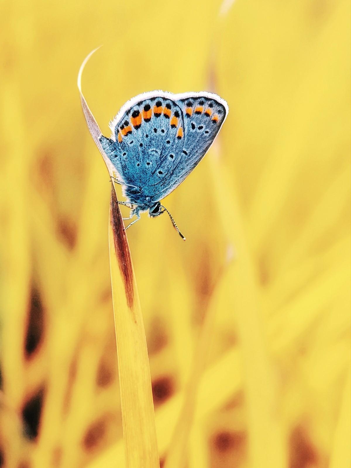 ②群 河北-酷我世界 《蝴蝶的迷梦》 HUAWEI.jpg