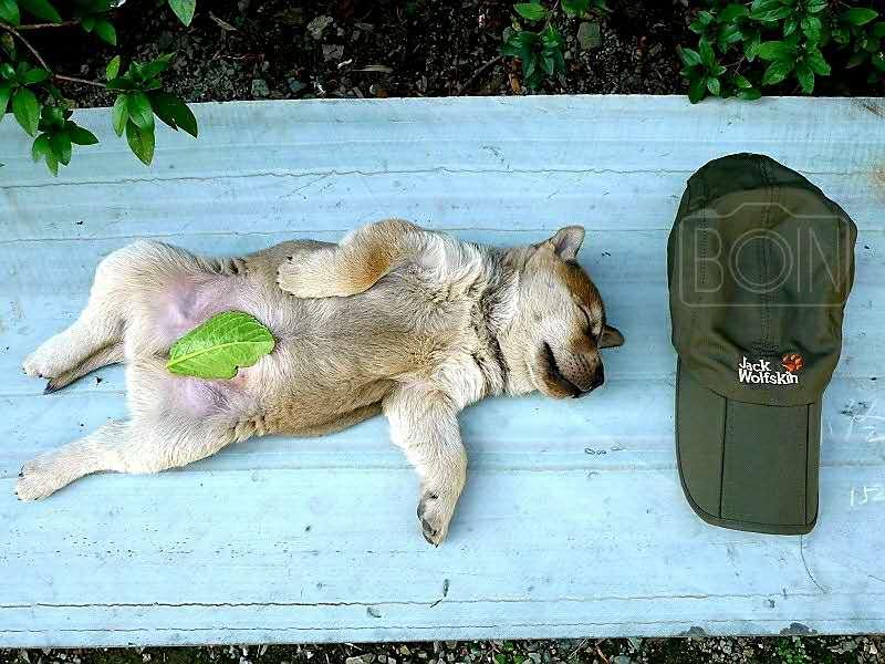 ⑨群  广西-波音 《午睡的狗狗》 徕卡.jpg