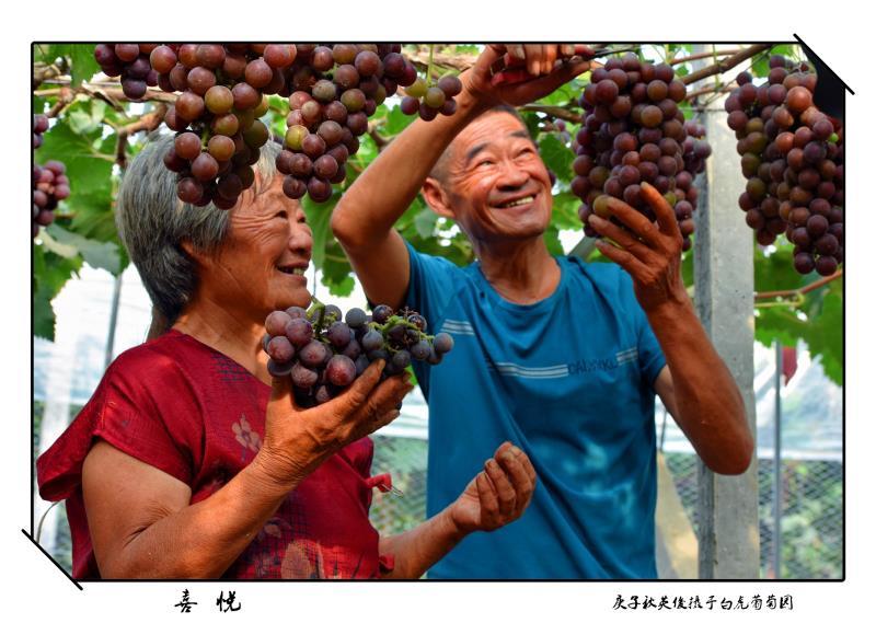 ⑥群 山东-宁英俊 《喜悦》 Nikon.jpg