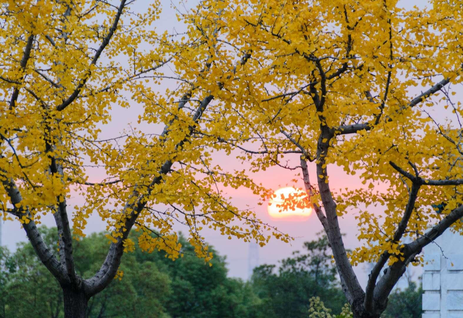 贝贝贝 《金秋》 Nikon.jpg