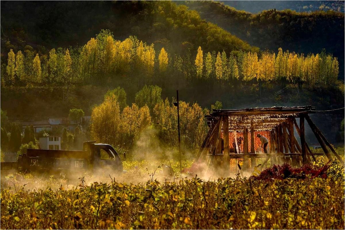 河北-哒歌 《累累柿子红》 Nikon.jpg