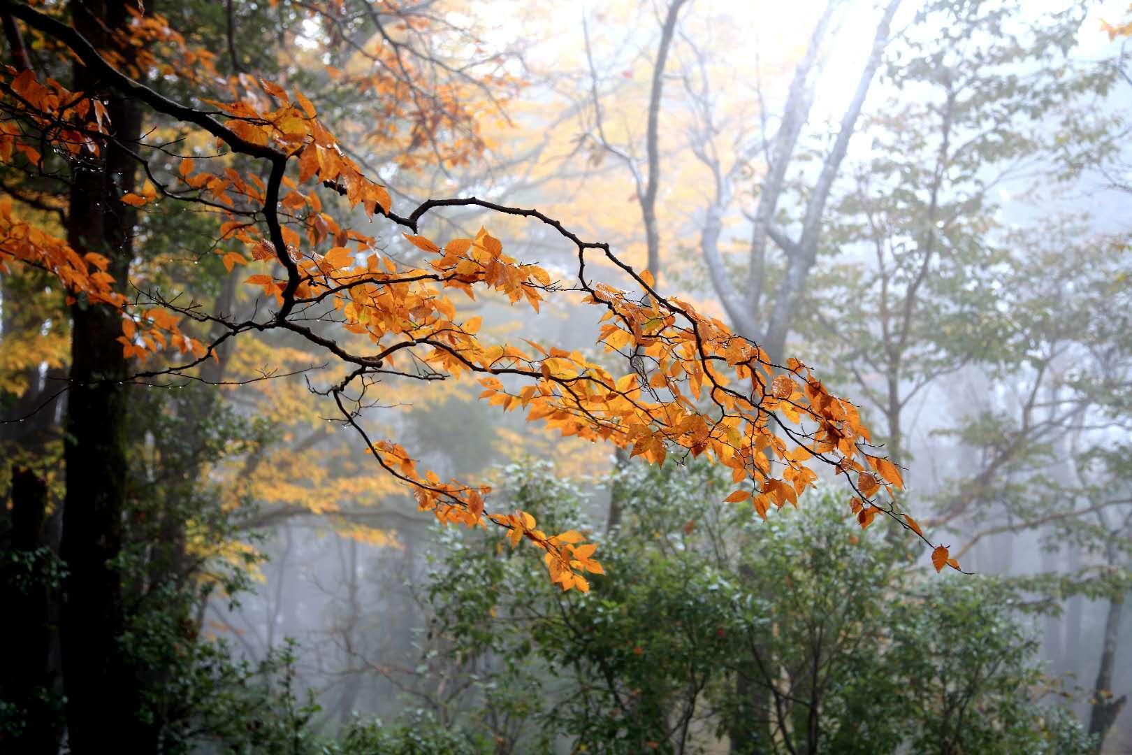 四川南部-蒲炜 《无题》 Canon.jpg