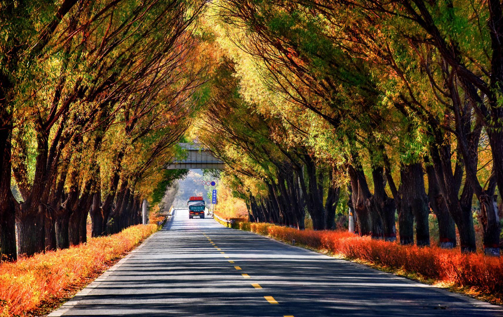 ①群 江苏-冷益平 《秋韵》 Nikon.jpg