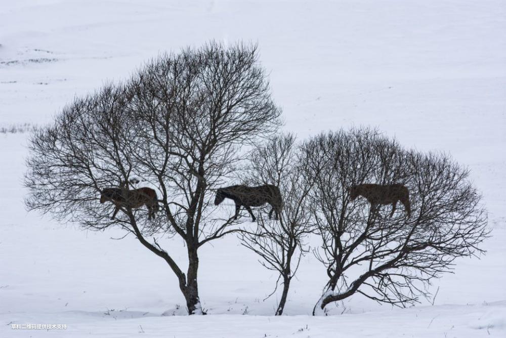 王金宏《关山雪影》 Nikon,陕西宝鸡关山牧场冬季,海拔2100米冬季积雪4-5个月,美景如画。.jpg