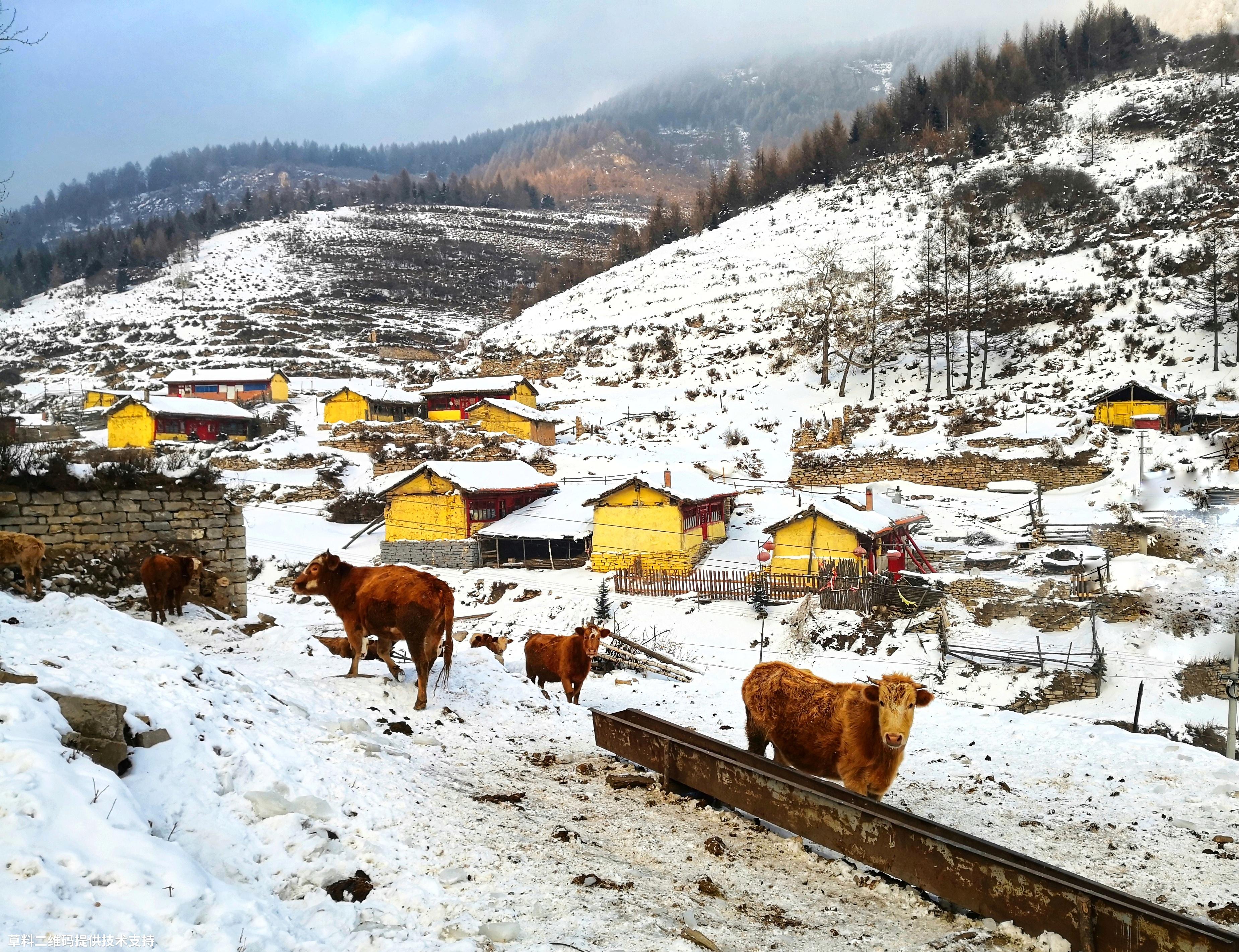 翟国栋 《静静的小山村》HUAWEI,下雪徒步上山,发现村民因寒冷,都躲在家里取暖,只有牛儿静静的在外觅食。.jpg