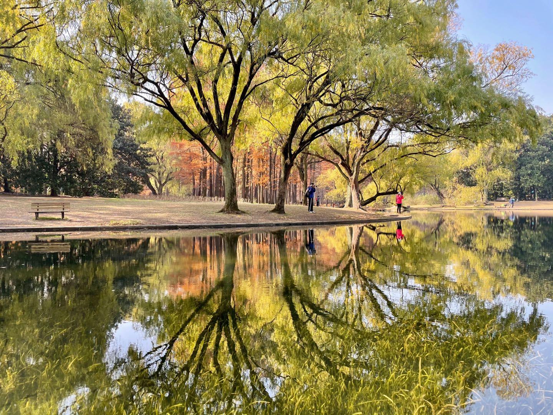 上海:共青森林公园2.jpg