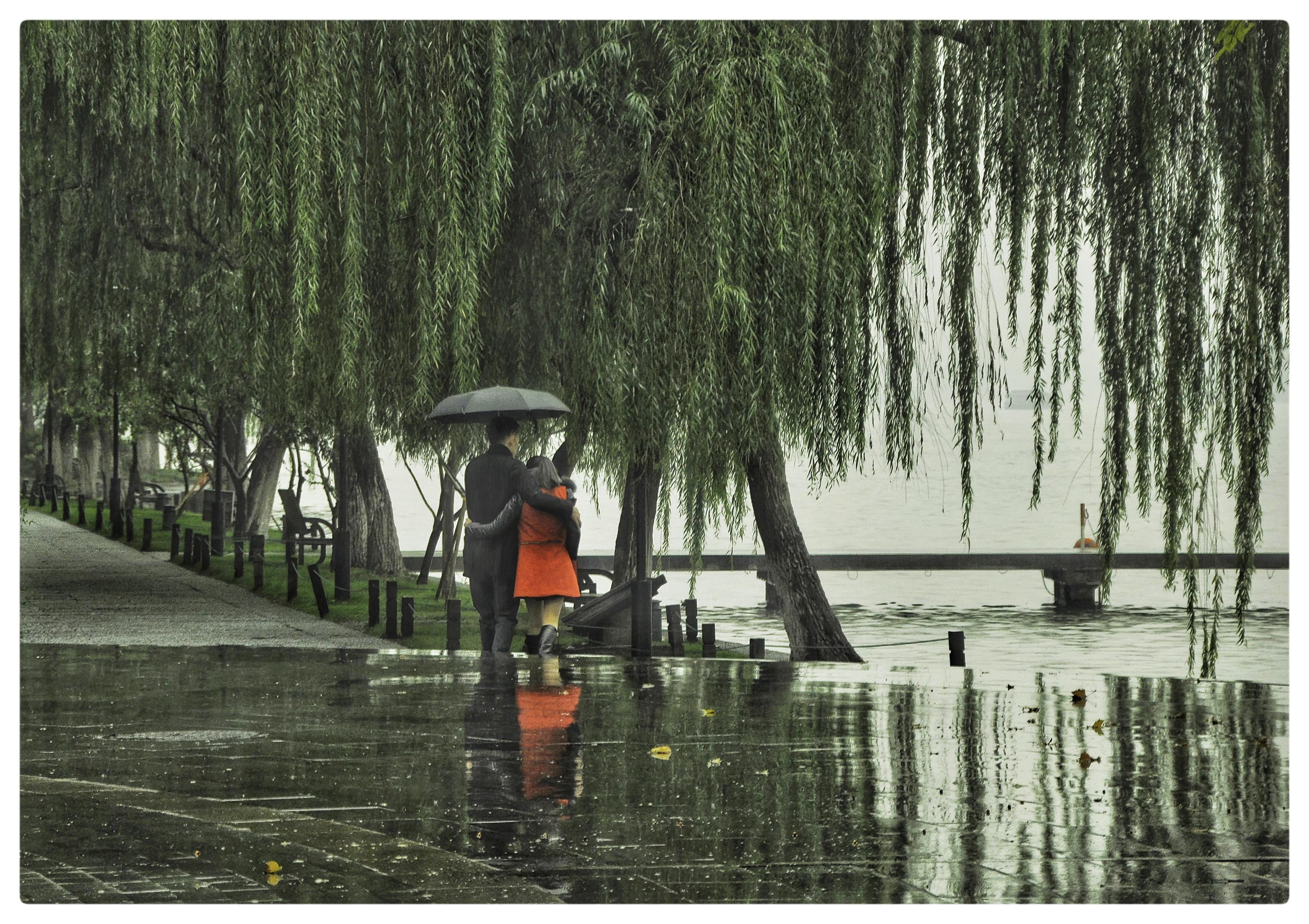 北京-谢天瑞 《雨中情》 Nikon.jpg