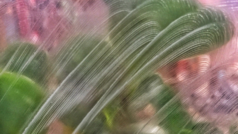 朦胧的绿叶.jpg