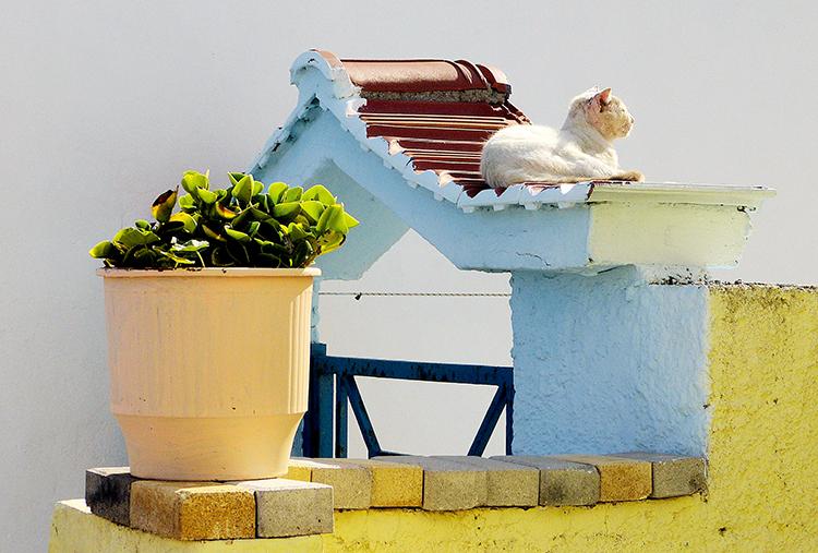 猫咪也进入慵懒的海岛生活状态 F4,1/2500秒,ISO100