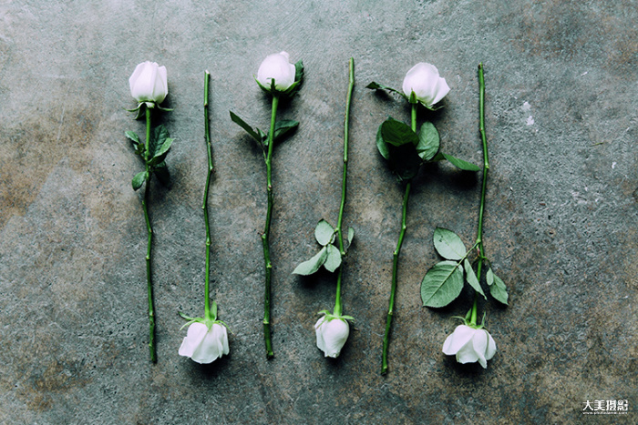 清晨,新鲜的花束被送到Florette的花房  F5.6,1/125秒,ISO100