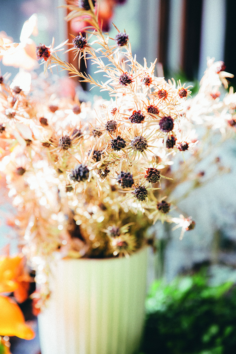 小院里的花  F4,1/100秒,ISO100